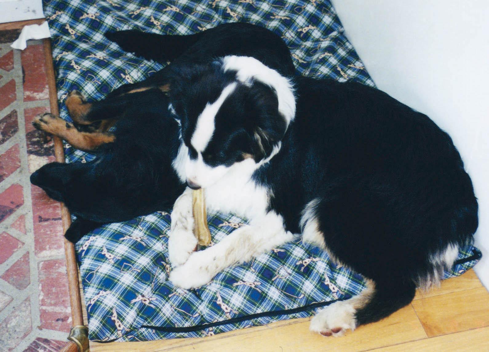Kiera and Magic-- The Snuggle Bunnies