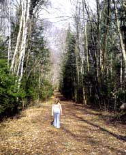Ave of the Birches