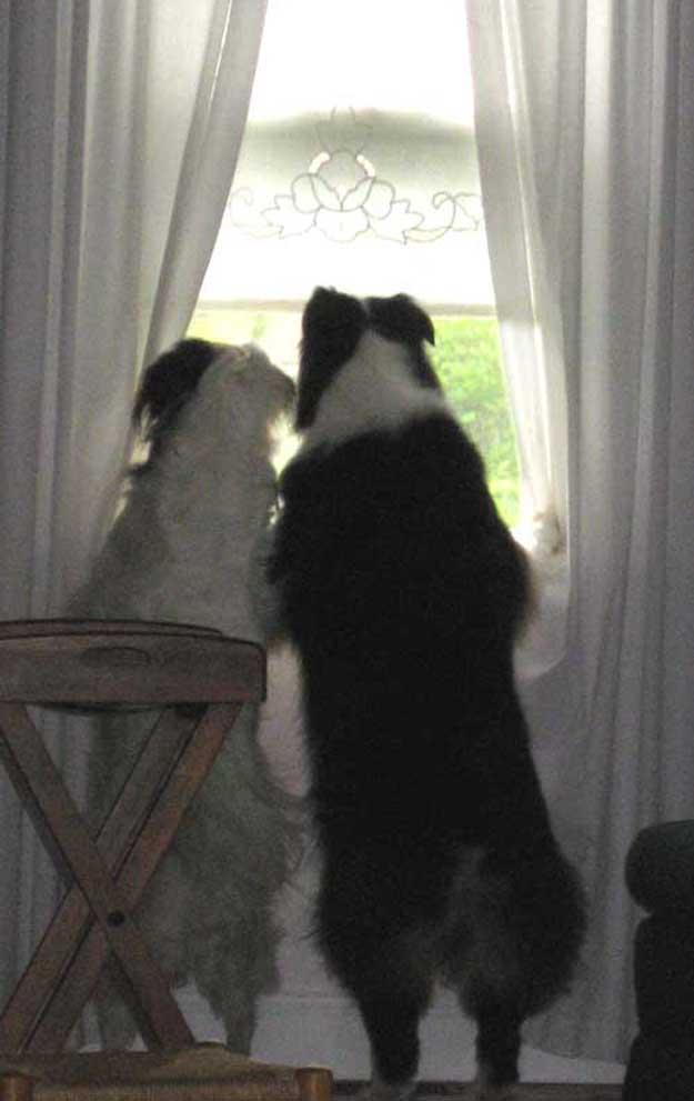 two-in-the-window.jpg