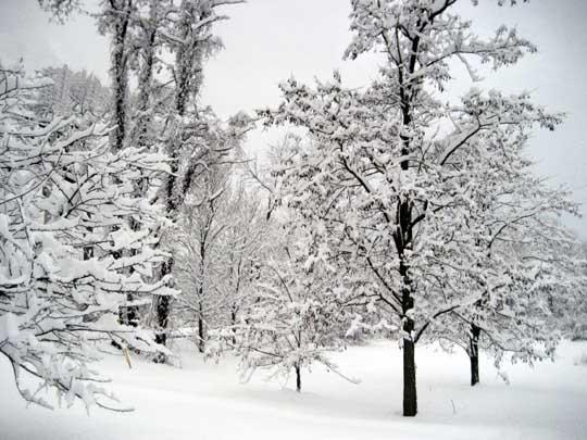 untouched-snow.jpg