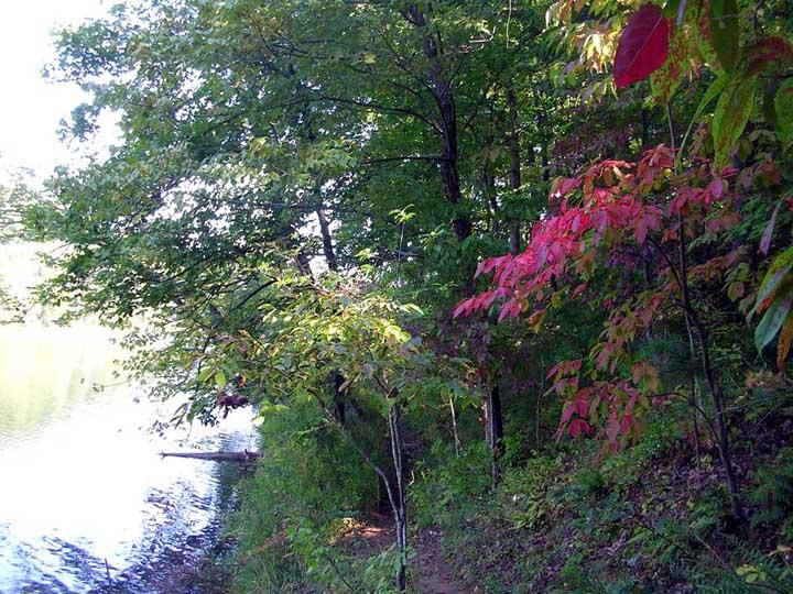 fall-leaves-turning.JPG