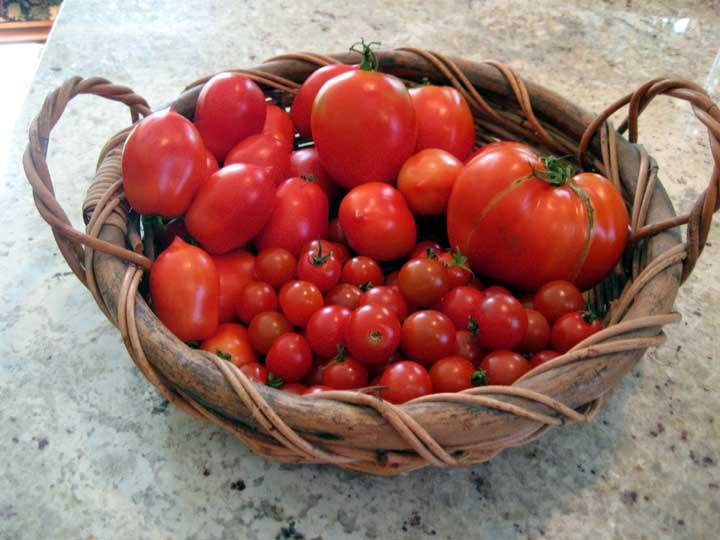 tomato-varieties.jpg