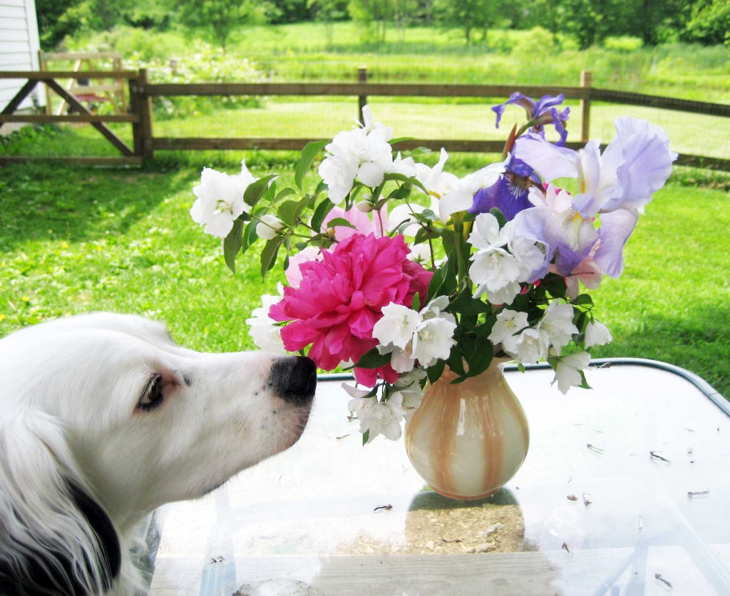 sniffing-flowers