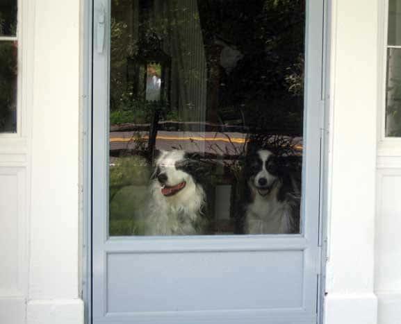 dogsdoor