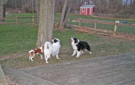 3 dogs talking