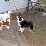 Is Having Three Dogs Better Than Two or One?