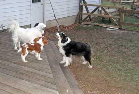 dogs talking