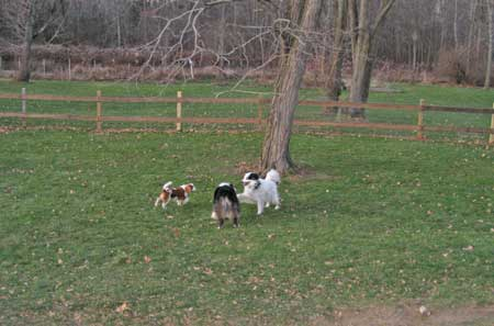 more dog running playing