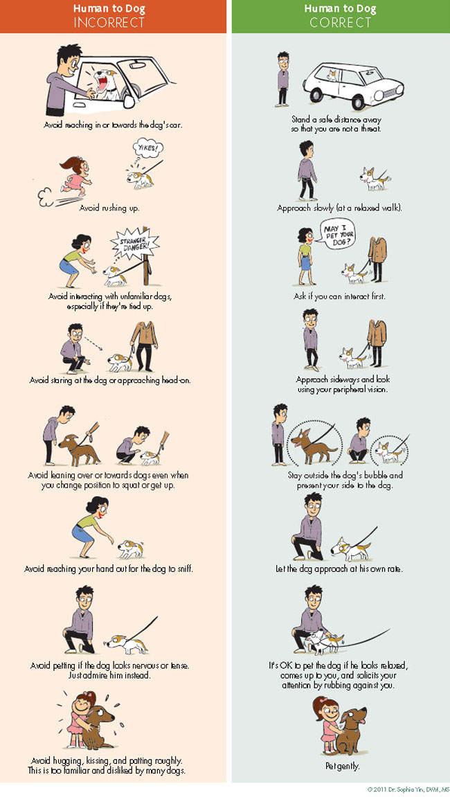 How to Greet a Dog poster