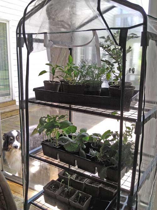 seedlings in hot house