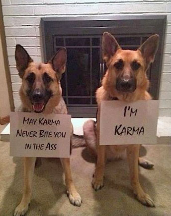 2 german shepherds with signs