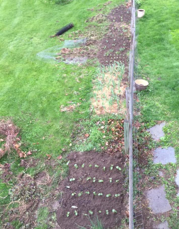 early gardening