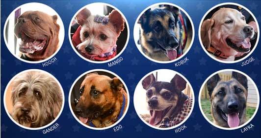 Dog Heros