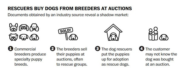 Shelters buy Puppy mill dogs