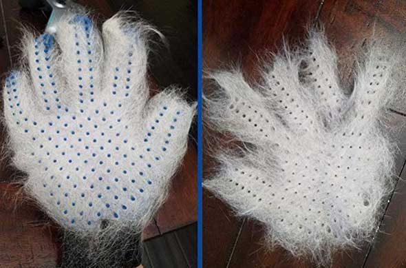 grooming glove full of hair