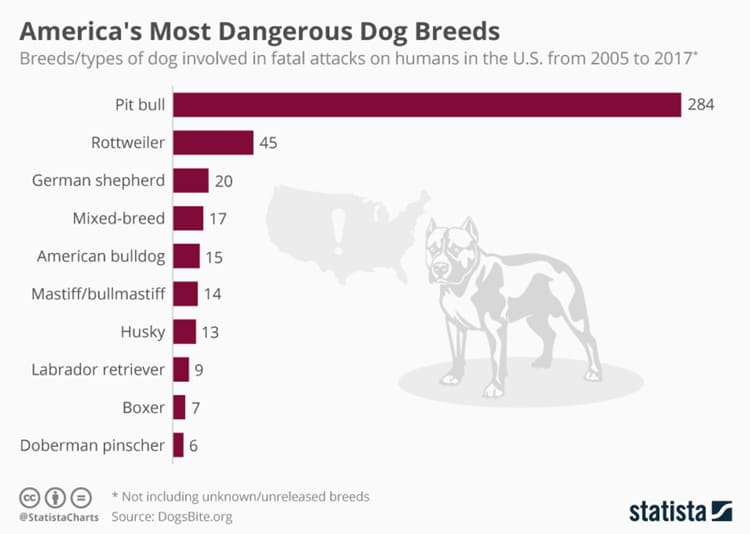 Most dangerous dog breeds infographic
