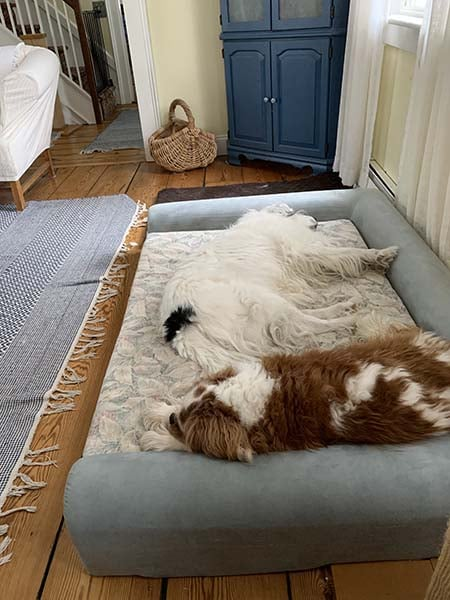 2 dogs sleeping on dogbed