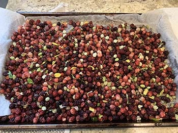 mulberries on sheet pan