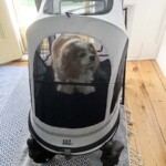 Dog Stroller Review: No-Zip Expedition Zipperless Entry Pet Stroller
