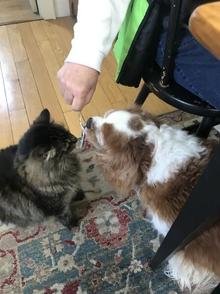 cat and dog sitting at table
