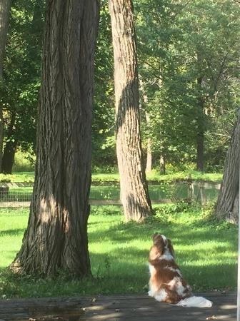 chipmunks and squirrels galore